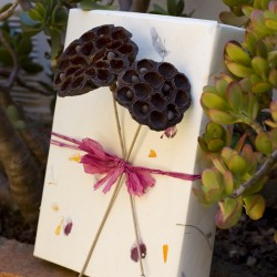 Eco Pods Gift Wrap