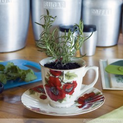 Cook Up A Kitchen Garden