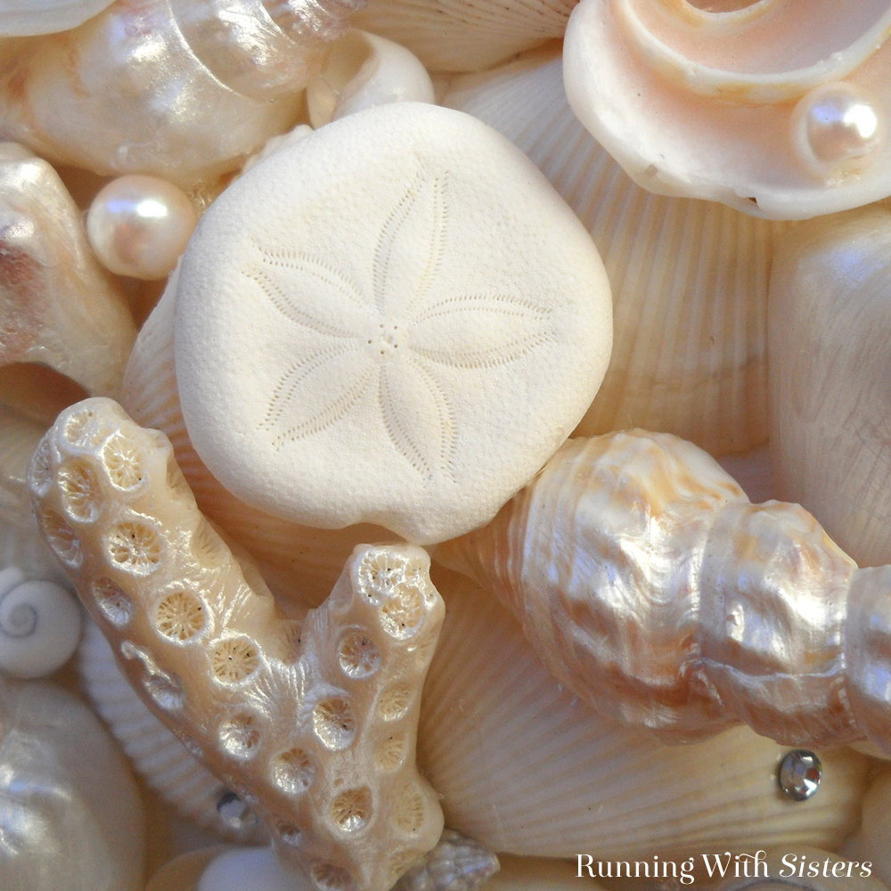 Make a beachy seashell heart to hang on your door! This craft how-to will show you how to arrange the sells, add pearls and gems, and attach the hanger.