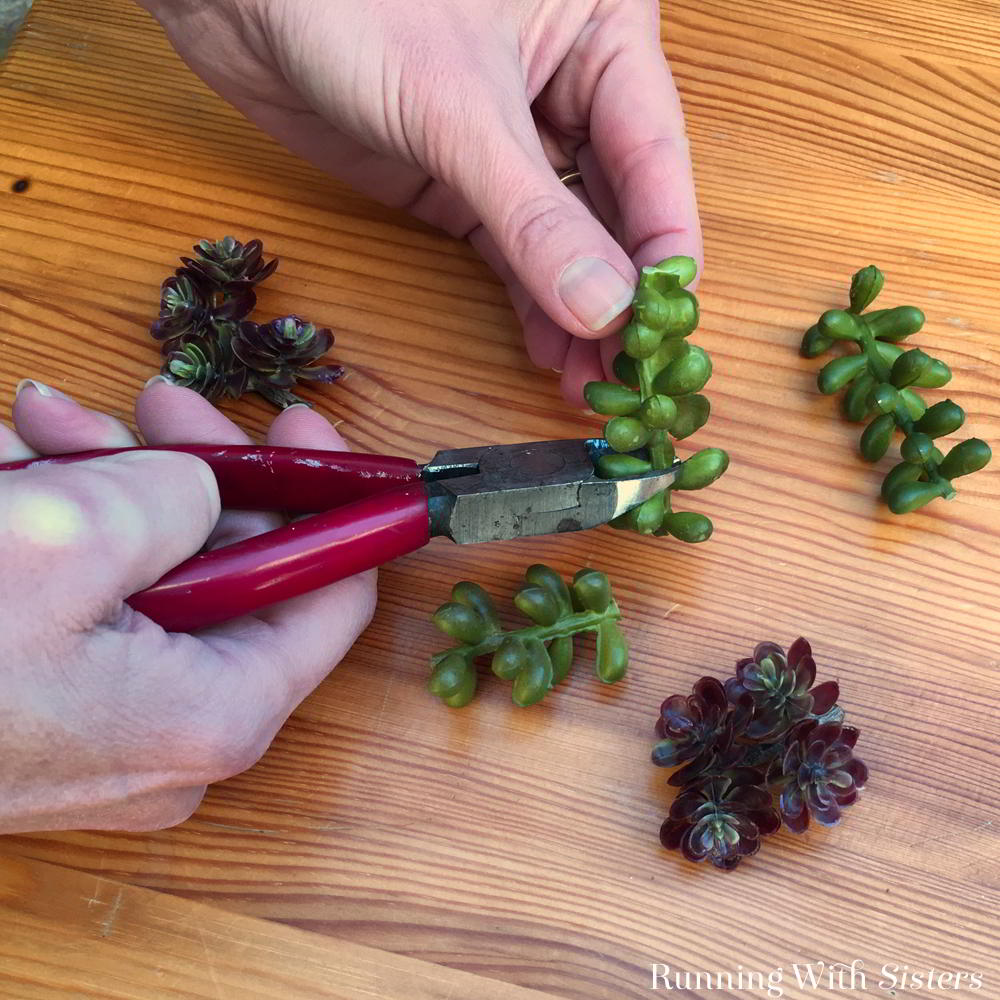 Make a succulent wreath in the shape of a heart for Valentine's Day!