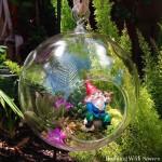 Succulent Bubble Garden