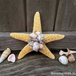 Make A Shell Embellished Starfish