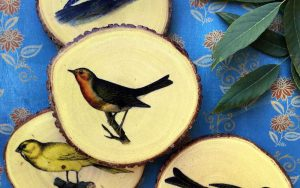 Mod Podge Image Transfer: Backyard Bird Coasters